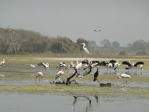 Migratory Birds in Manjira wildlife sanctuary