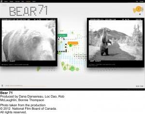 Bear 71