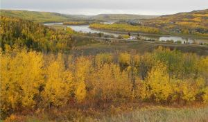 The Peace River, winding through the town of Peace River, Alberta (Image from Wikipedia)