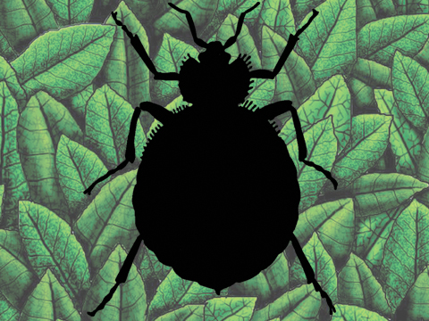 Photo: Bean leaves, bedbugs and biomimicry