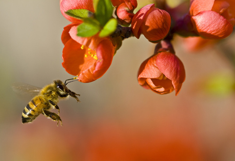 Photo: Scientists work to solve mystery of dying bees