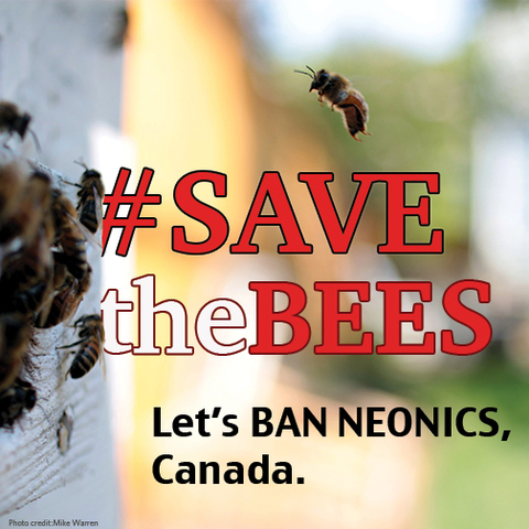 Photo: It's time to save the bees and ban neonic pesticides