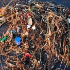 David Suzuki: We have to stop filling and killing the oceans with plastic