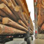 Raw log exports skyrocket in British Columbia