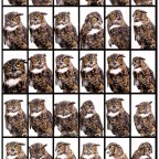 OWL Open House