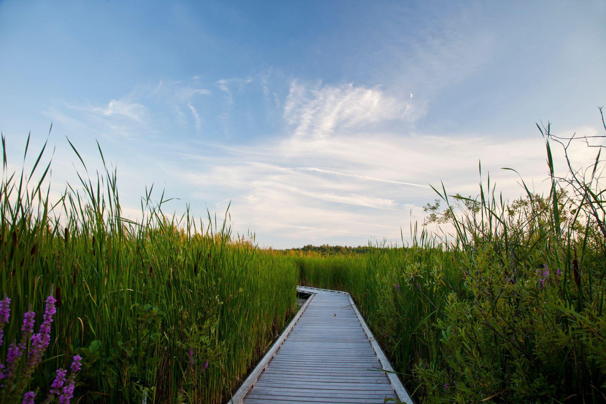 Biosphere and Us / Ecosystem / Bog ecosystem. Mer Bleu, Ottawa. - Photo National Capital Commission / Commission de la capitale nationale